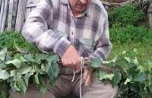Из какой травы делают веники